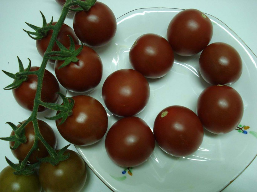 Tomate Cherry Chocolate